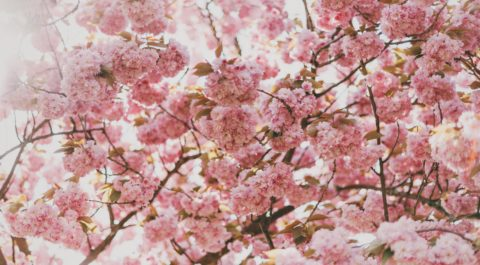 Spring Allergies: What you need to know Training Course - Angel Training, Kent