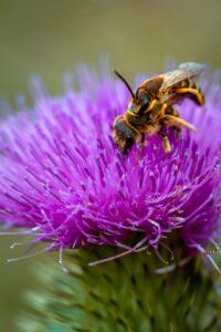 Bee sitting on a purple flower