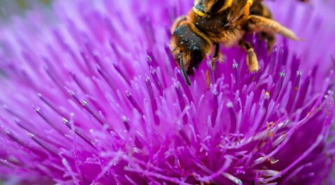 Taking the sting out of first aid: Bee and Wasp Stings Training Course - Angel Training, Kent